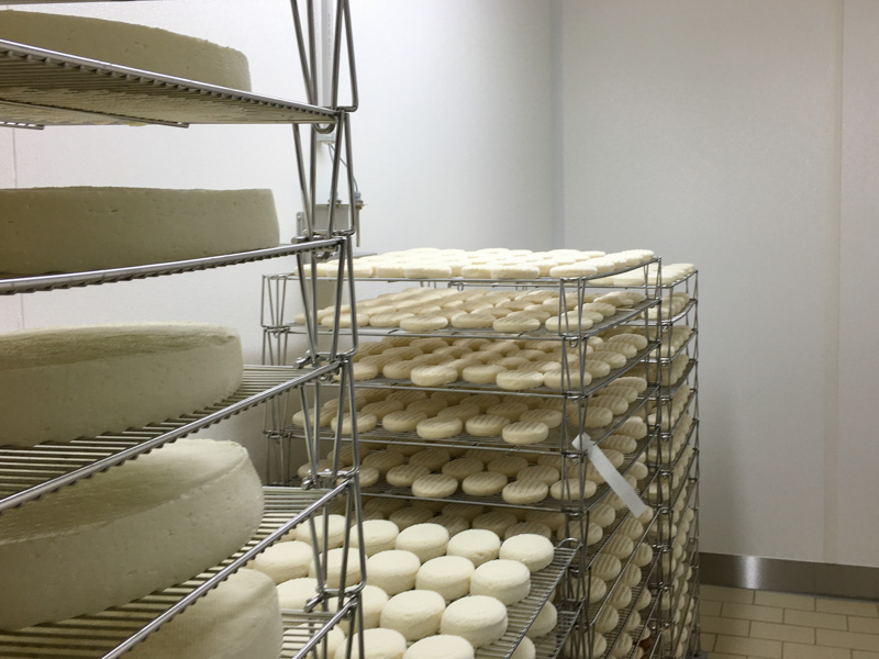 hygienic cheeseproduction